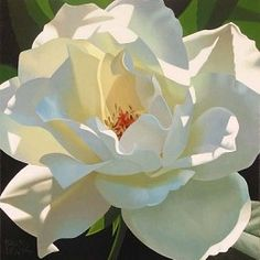 """Brian Davis """"Rose in Shadows"""" is a signed numbered limited edition canvas from floral artist Brian Davis Love Flowers, White Flowers, Beautiful Flowers, Draw Flowers, Art Hyperréaliste, Watercolor Flowers, Watercolor Paintings, Watercolors, Floral Paintings"""