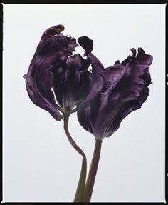 CURIOSITIES - bloom issue 15