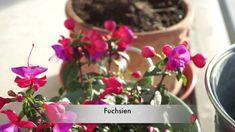 Balkon, Terrassen, Loggia Frühlings Saison, meine Pflanzen Videos, Plants, Beauty, La Mode, Pot Plants, Porches, Balcony, Nature, Flowers