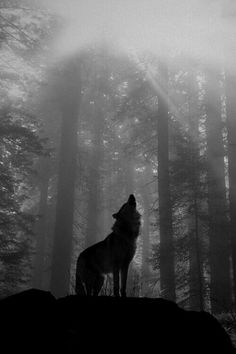 Silhouette lone wolf - would make a gorgeous, detailed tattoo