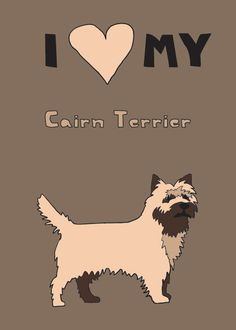 Cairn Terrier. My parents have, this looks just like Nigel!!!