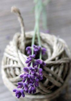 Home & Inspiration Lavender Cottage, French Lavender, Lavender Blue, Lavender Fields, Lavender Flowers, Beautiful Flowers, Lavender Scent, Purple Interior, Malva