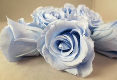 Light Blue medium preserved roses heads.  by:-Spring