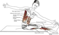 """Pilates exercise """"SAW"""" I love this movement pattern, just look at all the muscles involved."""