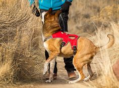 #Ruffwear harness.  Love this for my #tripawd. Works great with her back leg amputation.