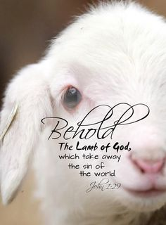 Behold the Lamb of God...