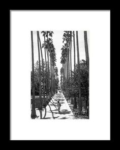 Best Graduation Gifts : Arizona State University Palm Walk Framed Print by University Icons. All framed High School Graduation Gifts, Arizona State University, Inspirations Magazine, College Campus, Inspirational Gifts, Unique Gifts, Palm, Custom Printing, Framed Prints