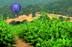 Take a bike tour or walking gourmet tour through California Wine Country with Backroads. Cycle from vineyards to coast, partake in farm-to-table meals and savor some of the best wines California has to offer.  http://www.backroads.com/search/trips/BWCI/BAVI/WWCI-9/BSBI/BBSI?p=D546  #winecountry #napa #sonoma