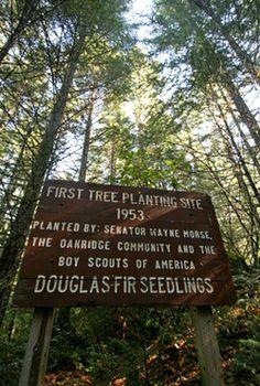 An annual Treeplanting Festival is held in Oakridge, Oregon