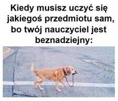 Funny Friday Memes, Friday Humor, Accounting Humor, Polish Memes, Funny Sms, Education Humor, Wedding Quotes, Animal Design, Celebrity Weddings