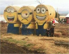 Minion hay bales... awesome