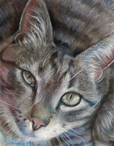 """Daily Paintworks - """"Stink Eye  11 x 14 pastel on sanded paper"""" - Original Fine Art for Sale - © emily Christoff-Flowers"""