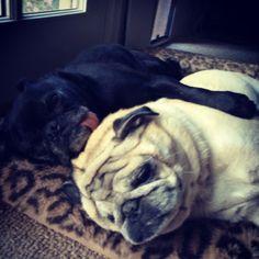 Hug Pugs Hugging :) #pug #pugs #hugpug #hugpugs Pugs, Animals, Animales, Animaux, Pug, Pug Dogs, Animal, Animais