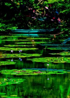 Beautiful green Water Lillies.