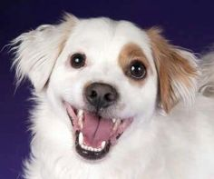 Love this dogs crooked smile!