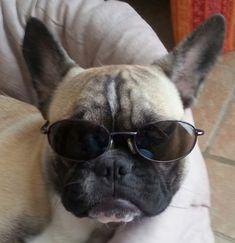 lunettes bouledogue français