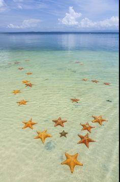 Starfish Beach, with many starfish in the shallow sea (Asteroidea) Colon Island, Bocas del Toro Archipelago, Bocas del Toro Province, Panama. Wallpaper Paisajes, Beach Town, Panama City Panama, Archipelago, Belize, Nature Pictures, Amazing Nature, Starfish, Strand
