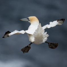 'Highly Commended' Funny Wildlife Photo: Charlie Davidson, United Kingdom