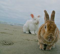 Beach Bunnies 2 Fine Art Bunny Photography Home Decor Nursery Art Rabbit Photo Bunny Photos Children's Room Art Easter Gift Cute Bunny Art on Etsy, $20.00