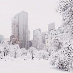 CentralPark NYC NewYork in the snow.