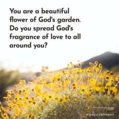 """You are a beautiful flower of God's garden. Do you spread God's fragrance of love to all around you? Contentment Quotes, Stay Happy, Inspirational Message, Motivationalquotes, Quote Of The Day, Wise Words, Beautiful Flowers, Life Hacks, Love Quotes"