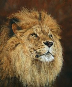 African lion painting by David Stribbling