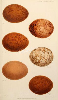 birds_parts_eggs-02836 - 109 Eyeshadow, Eggs, Birds, Digital, Eye Shadow, Egg, Bird, Eyeshadow Looks, Eye Shadows