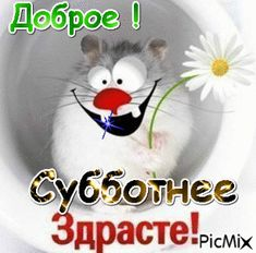 Суббота ! Good Morning My Friend, Good Morning Flowers, Happy Weekend, Morning Quotes, Wallpaper Backgrounds, Beautiful Flowers, Christmas Ornaments, Holiday Decor, Kitchen Decor