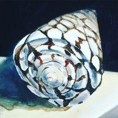Marble Cone Study 8x10. Coastal Art, Sea Shells, Marble, Study, Painting, Studio, Shells, Paintings, Seashells