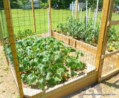Growing in Grace: Fencing & Growth of our Raised Gardens @ http://jo-ann-growingingrace.blogspot.com/2012/06/fencing-growth-of-our-raised-gardens.html