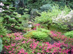 Azaleas in The Japanese Garden at The Butchart Gardens