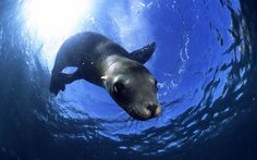 underwater photos of animals - Google Search