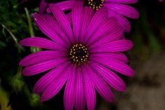 Flower by Peter.Thurgood, via Flickr