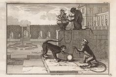 Sapajou et guenon, estampe tirée de Claude Perrault (1613-1688) © Bibliothèque du MNHN, collection des estampes