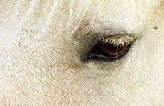When It's Time, One of the hardest decisions that a horse owner will even have to make is deciding when a horse's time is over.