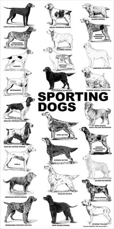 Aaronco Poster - Non-Sporting Dogs Dog Grooming Salons, Dog Grooming Business, Pet Grooming, Labrador Retriever, Golden Retriever, Perro Fox Terrier, Terrier Dog Breeds, Dog Breeds Chart, Pet Dogs