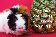 The do's and don'ts of feeding your pet #pet #petcare #food #pethealth Colored Sugar, Fast Healthy Meals, Easy Cooking, Melting Chocolate, Guinea Pigs, Pet Care, Paper Texture, Gourmet Recipes, Food Print