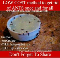 Low Cost Method To Ger Rid Of Ants Once And For All