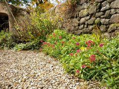 Image detail for -gravel garden maintenance - ECOLOGICA GARDENS