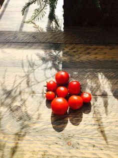 Art of tomatoes