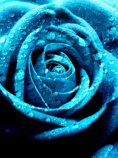 Turquoise Rose Close-up - vma.