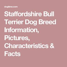 Staffordshire Bull Terrier Dog Breed Information, Pictures, Characteristics & Facts