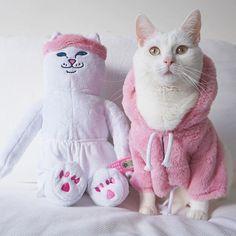Zappa the cat Zappa, Tumblr, Cats Of Instagram, Cat Lovers, Bunny, Kitty, Pets, Pet Stuff, Lord