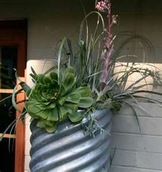 galvanized pipe planter 10 California Landscape Ideas for Contemporary ...