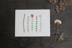 Botanical Flower Composition 4x5 Print - High Quality Print - Watercolor Illustration