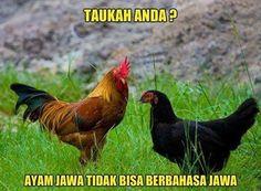 Ayam jawa tidak bisa berbahasa Jawa - #Meme - http://www.indomeme.com/meme/ayam-jawa-tidak-bisa-berbahasa-jawa/