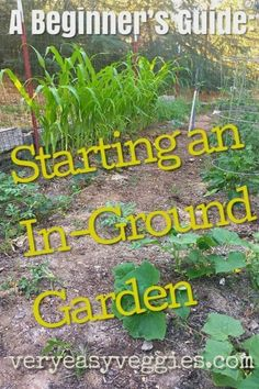 How to plant a garden for beginners step by step tutorial. All beginner gardeners need to know to get started with an in ground garden bed. for beginners The In-Ground Garden Garden Care, Diy Garden, Shade Garden, Garden Tools, Garden Bed, Garden Ideas, Garden Inspiration, Design Inspiration, Vegetable Garden For Beginners