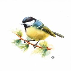 Pájaro de Tit acuarela - pintura Original 7 4/5 x 7 4/5 pulgadas