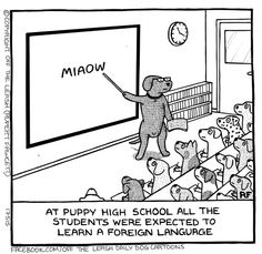 At puppy high school. .. #offtheleash