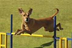 Dog+Agility | It's Nelly's World: Wonderfulest